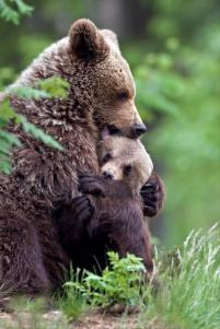momma bear and cub