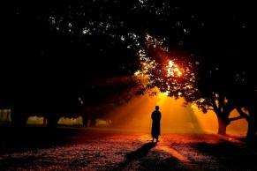 walking-forest-sunrise-outside-park-nature.jpg